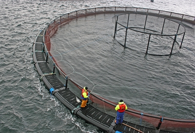 Read Our Latest Knowledge Base Article, Why Marine VHF Radios Are Important for The Aquaculture Sector