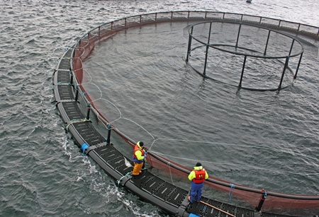 Why Marine VHF Radios Are Important for The Aquaculture Sector